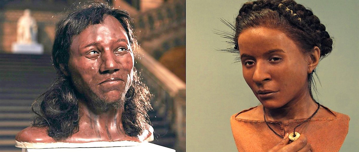 A reconstruction of Cheddar Man and a facial reconstruction of Whitehawk Woman
