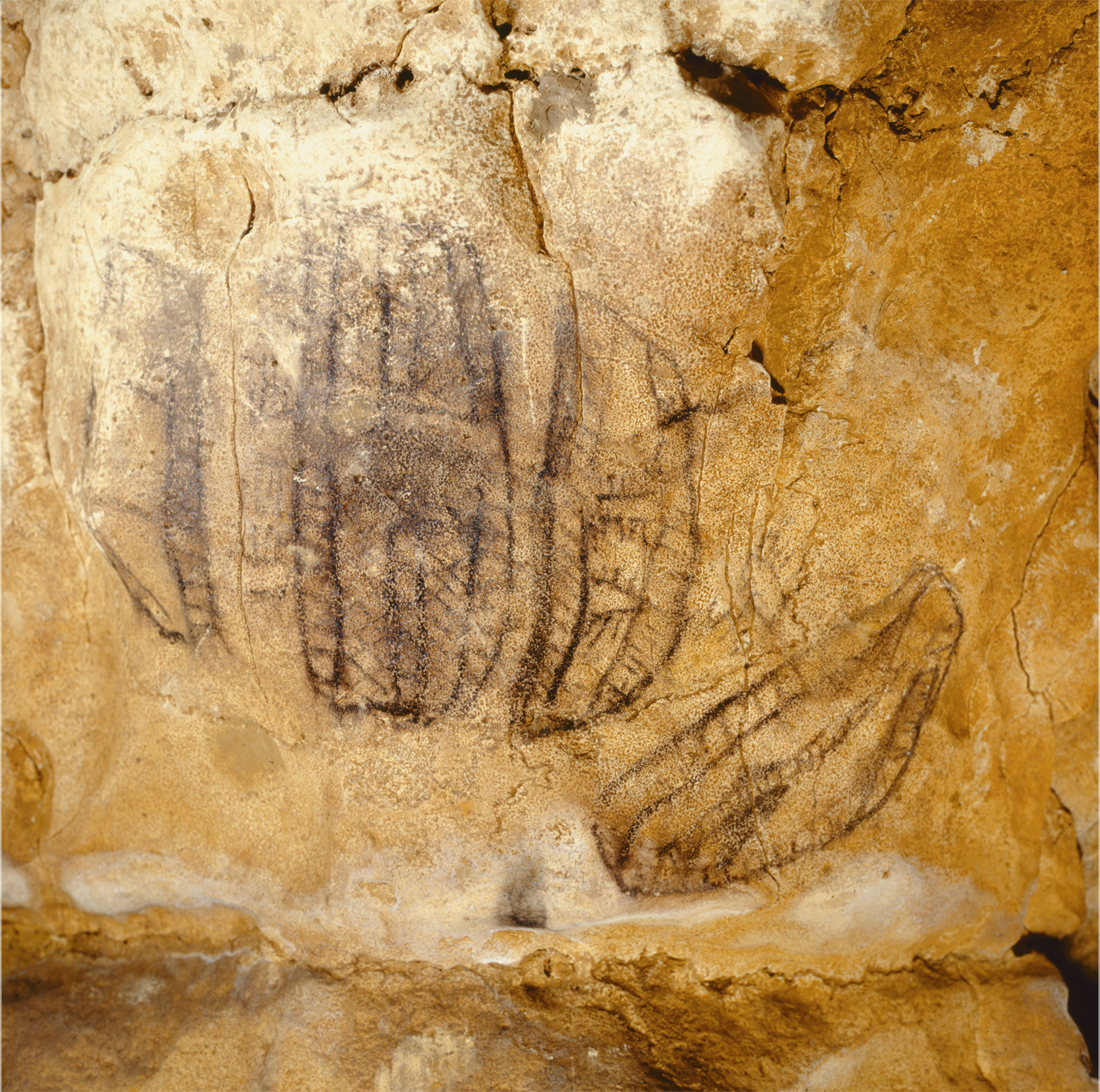 Black Signs Cave Art Paintings Altamira Spain Archaeology