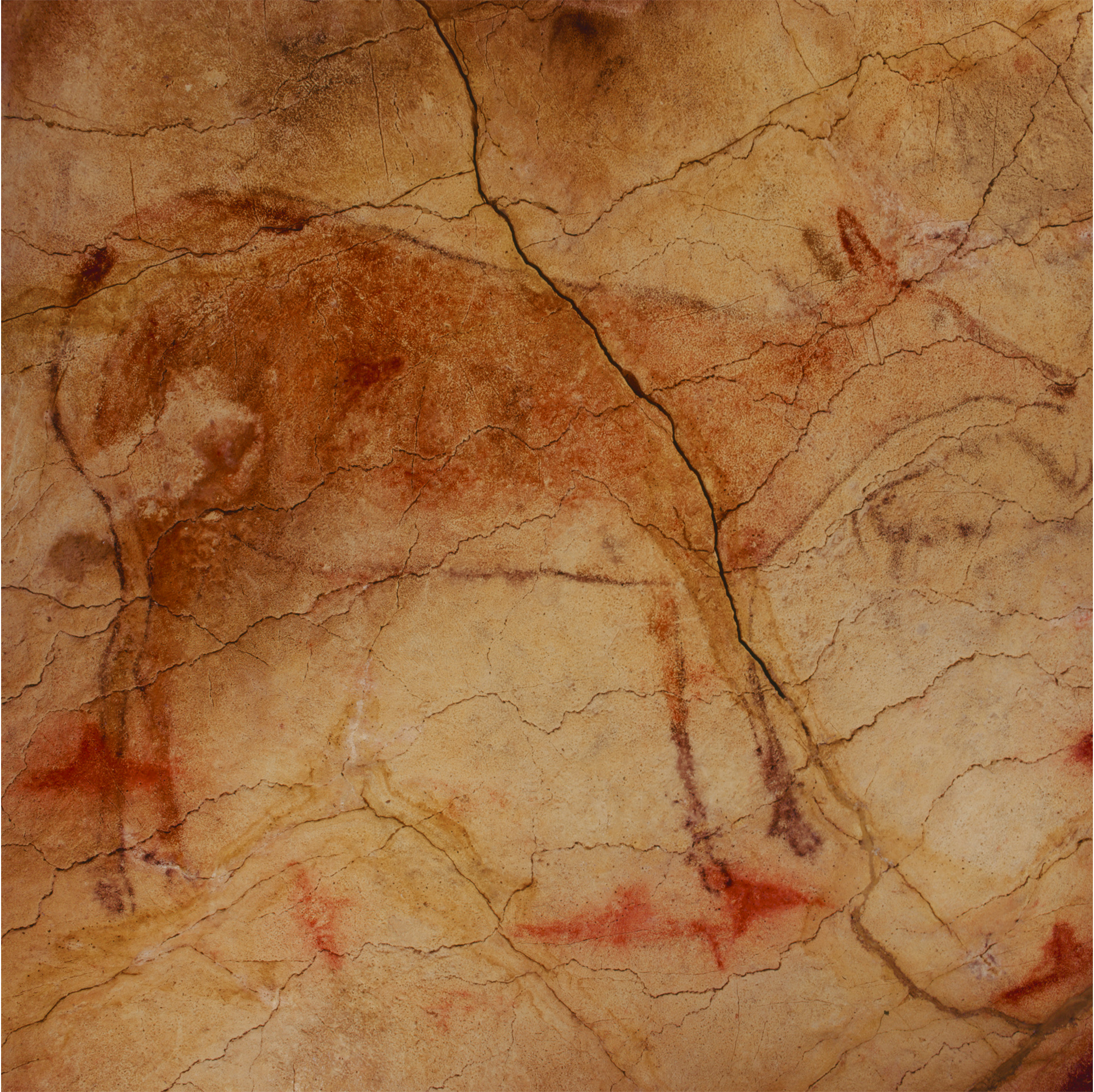 Hind Cave Art Paintings Altamira Spain Archaeology